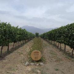 Emiliana Organic Vineyards User Photo
