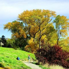 Lake Hayes Walkway User Photo