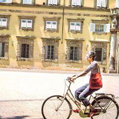 盧卡聖彌額爾廣場用戶圖片