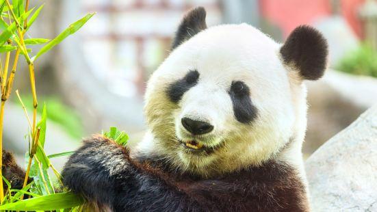 下渚湖熊貓園