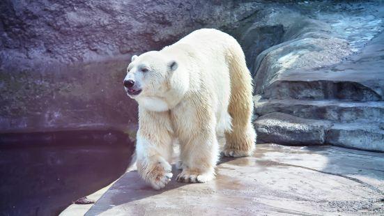 莫斯科動物園