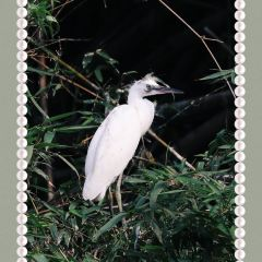 Bird Paradise User Photo