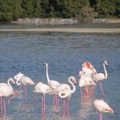Ras Al Khor Wildlife Sanctuary User Photo