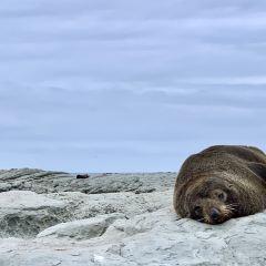 海豹棲息地用戶圖片