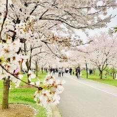 상하이 천산 식물원(상해 진산식물원) 여행 사진