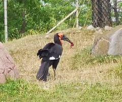 トロント動物園のユーザー投稿写真
