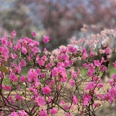 密蘇里植物園用戶圖片