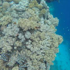 Pamilacan Island User Photo