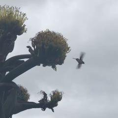 卡布里歐國家紀念碑用戶圖片