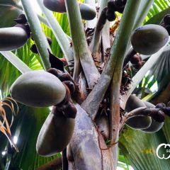 Vallee de Mai Nature Reserveのユーザー投稿写真