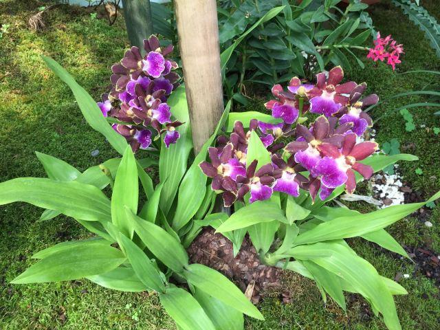 Phuket Orchid Farm