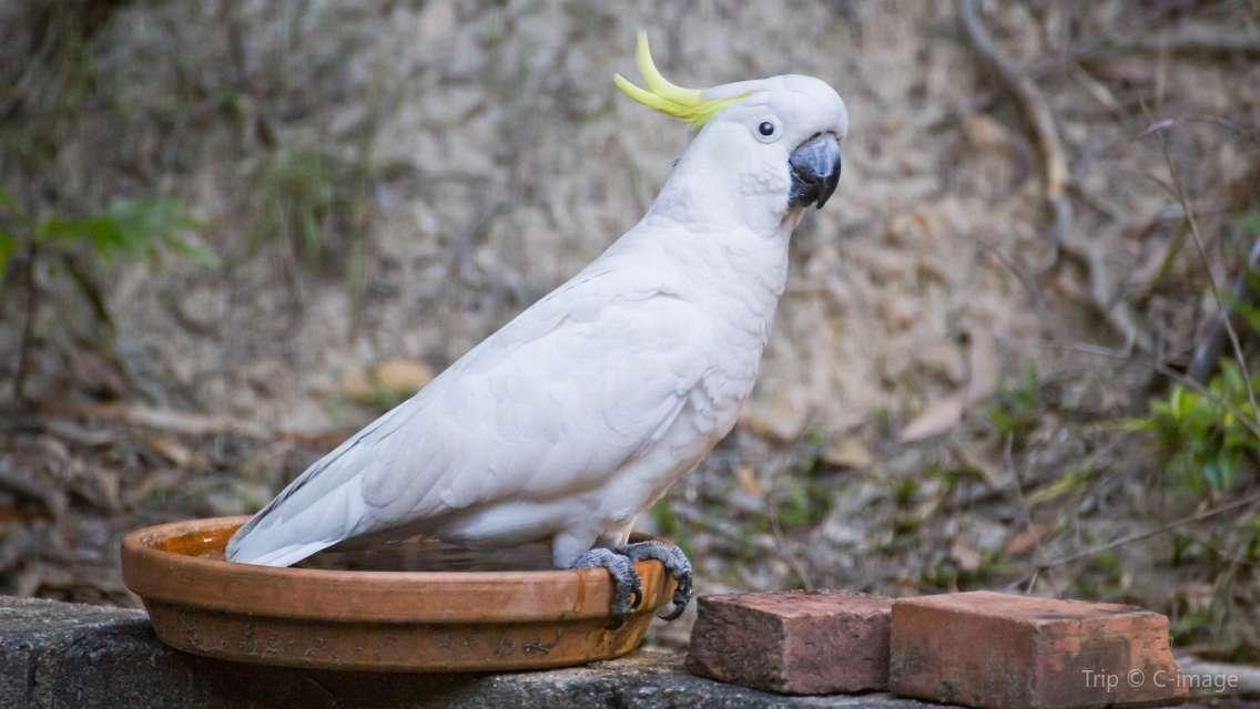 庫蘭達雀鳥世界門票