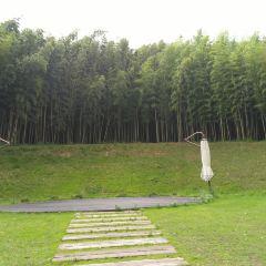 한국대나무박물관 여행 사진