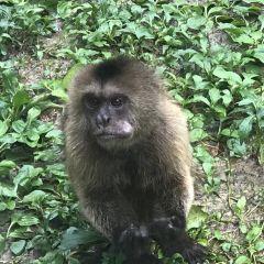 Bearizona Wildlife Park User Photo
