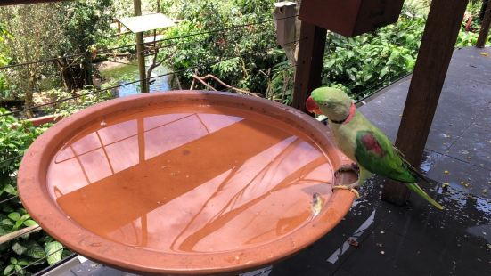 库兰达的雀鸟世界是个非常有趣的地方,这里是鸟类的天堂,这里饲
