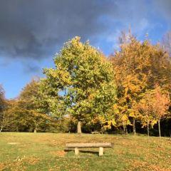 Royal Victoria Park User Photo