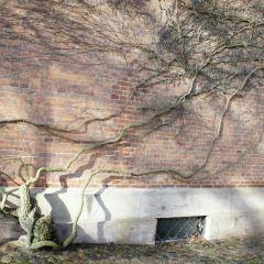 Roskilde Domkirke User Photo