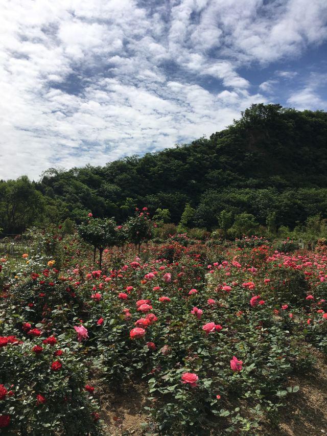 옌산 공원