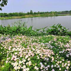 신빈 모란원 여행 사진