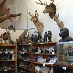 University of Aberdeen Zoology Museum User Photo