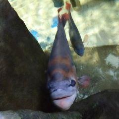藍珊瑚水族館用戶圖片