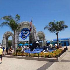 聖安東尼奧海洋世界用戶圖片
