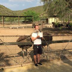 鴕鳥農場用戶圖片