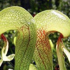 動物馴化園草本植物博物館用戶圖片