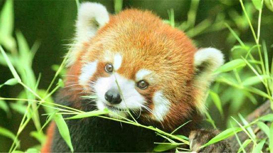 蘇海森林動物世界
