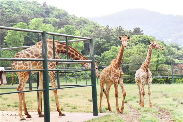 Wuxi Zoo,Taihu Lake Amusement Park
