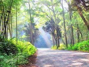 河洑國家森林公園