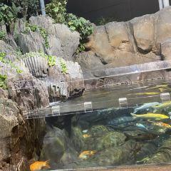 상하이 해양수족관 여행 사진