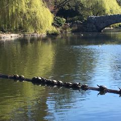 Beacon Hill Park User Photo