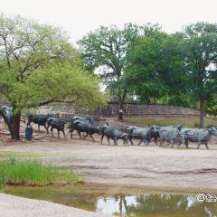 Dallas Cattle Drive Sculptures用戶圖片