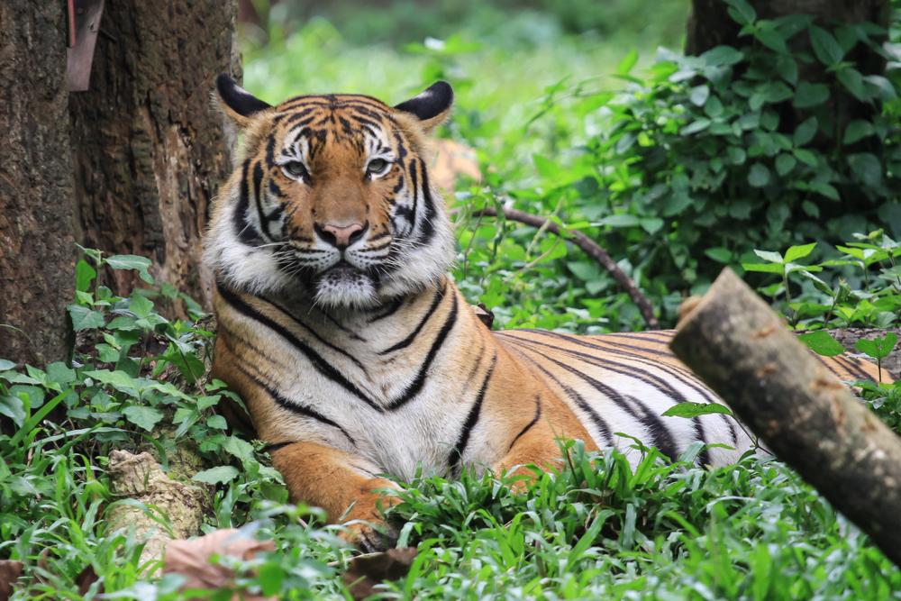 馬來西亞國家動物園門票