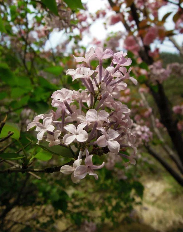 진롱쓰 국가삼림공원