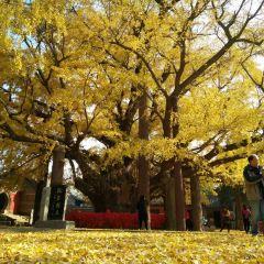 Dinglin Temple User Photo