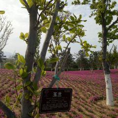 Yantai Botanical Garden User Photo