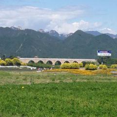Qikong Bridge User Photo