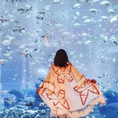 大使環礁湖用戶圖片