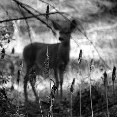 Yosemite Village User Photo