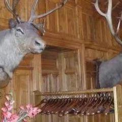 裡卡頓叢林與裡卡頓木屋用戶圖片