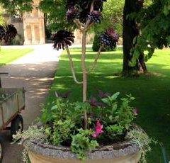 University of Oxford Botanic Gardens User Photo