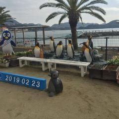 나가사키 펭귄 수족관 여행 사진