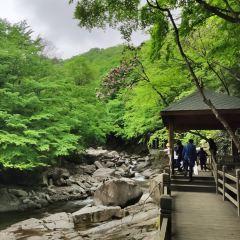 米倉山國家森林公園用戶圖片