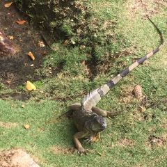 土著眼生態公園用戶圖片