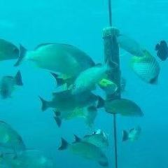 魚眼海洋公園用戶圖片