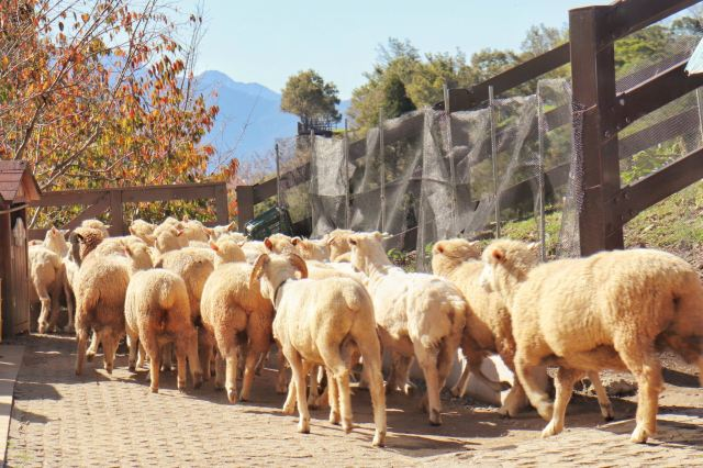 칭징 농장