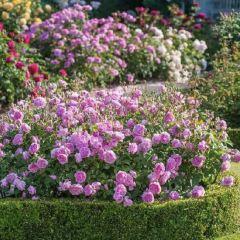 Northernhay Gardens User Photo