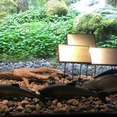 卡皮蘭諾鮭魚孵化場用戶圖片